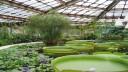 Власти Петербурга обратили внимание на проблемы Ботанического сада