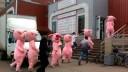«Хрюши против» были задержаны сотрудниками полиции