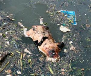 В сети Интернет обсуждают женщину, собирающую и убивающую собак