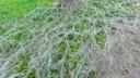 Горностаевая моль поразила уже 40 процентов деревьев