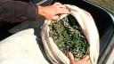 В Петербурге в результате операции «Мак» изъято четыре килограмма наркотиков