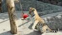 Ленинградский зоопарк сегодня отмечает день рождения