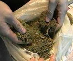В Финляндию незаконно ввозили сотни килограммов марихуаны