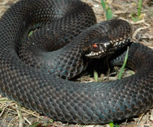 За лето змеи покусали двенадцать петербуржцев