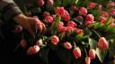 В октябре в городе посадят почти 11 тысяч деревьев и полтора миллиона тюльпанов