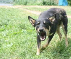 Бродячая собака напала на полицейского. Животное застрелили