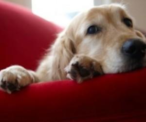 Догхантеры планируют массовую охоты на псов в Гатчине