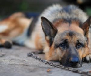В СПб будут судить жителя Разлива, чья дочь была насмерть травмирована собакой