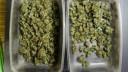 Грибы и марихуана привели жителя Петербурга в суд