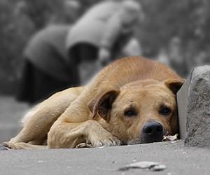 Парламентарии Ленобласти защитят бездомных собак