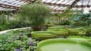 В Ботаническом саду Петербурга появится WiFi