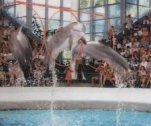 В Петербурге построят дельфинариум