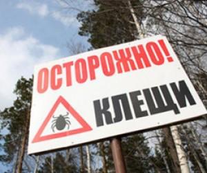 Петербург атакуют клещи