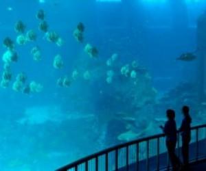 В Питере планируют строить океанариум, стоимостью 3,5 миллиарда рублей