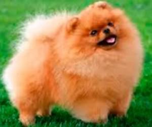 Жительница Петербурга в аэропорту потеряла собаку