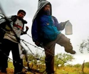 53 мигранта в Невском районе «отправят домой»