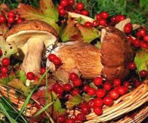 Фестиваль грибов и ягод в Юсуповском саду