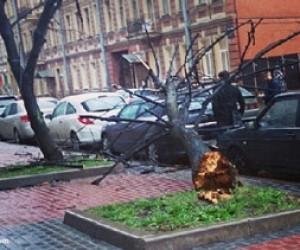 В Ленинградской области обесточены 124 населенных пункта