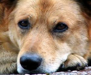 Почти 5 миллионов на кастрацию собак