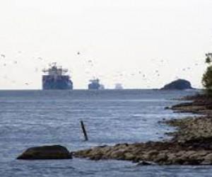 На Канонерском острове создадут морской парк?