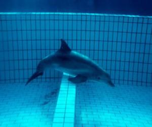 В Питере проверяют дельфинарий