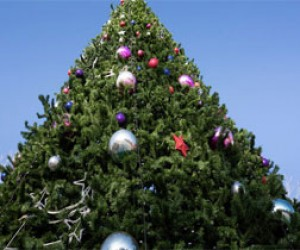 Новогодняя ель за тысячу рублей в подарок городу
