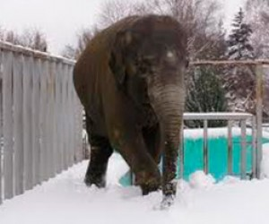 Петербургский цирк спасли от 40-градусного мороза