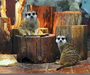 День Сурка в Ленинградском зоопарке
