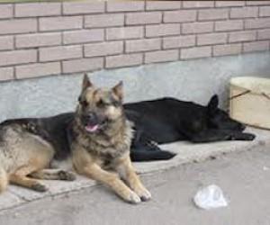 Питерскую пенсионерку загрызла стая собак