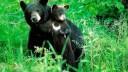 Гималайских мишек поселят в Ленобласти