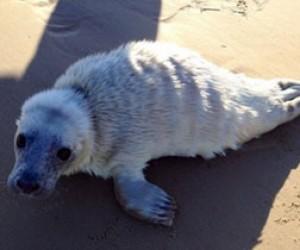 Ещё один тюлененок найден в строящемся порту