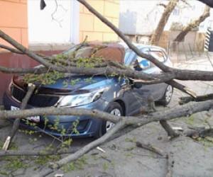 В Питере на машину американского консульства рухнуло дерево
