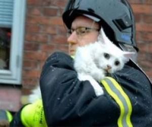 Из пожара спасли кошку с котятами