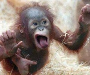 В центре города девочку покусала обезьяна