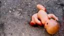 На Дачном проспекте нашли труп младенца