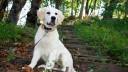 В Питере владельцы собак могут воспользоваться приложением для мобильных телефонов