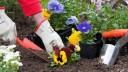 В Северной столице к ПМЭФ высадили 57 тысяч цветов и кустарников