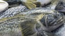 В Петербург не пустили 108 тонн рыбы из Кореи