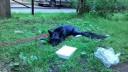 В Петербурге рабочие нашли домашнюю лису