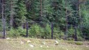 Иностранцы под Выборгом пытались пересечь границу с Финляндией