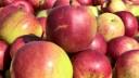 Петербуржцы устроили давку в очереди за освященными яблоками