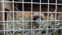 Авария на теплосети привела к гибели животных из зоомагазина