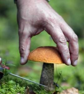 Места, где можно собирать грибы