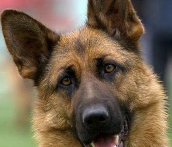 Собаководы адмиралтейского района бьют тревогу