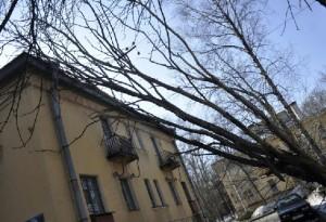 Пять районов Ленобласти остались без электричества