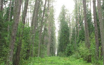 В Петербурге открылась конференция, посвященная лесной политике России